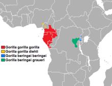 distribuzione_gorilla